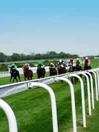 Horse racing at Ascot - arrive in style by chauffeur driven car